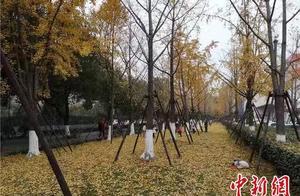 强寒潮来袭 浙江启动低温雨雪冰冻灾害Ⅳ级应急响应