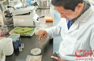 乘嫦娥五号探月的华农水稻种子发芽了