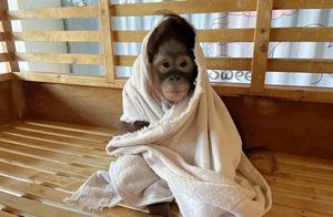 冬日进补、温泉洗浴、暖气开足……小动物们寒潮天不用愁