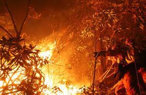 云南香格里拉发生森林火灾 三条火线同时扑救