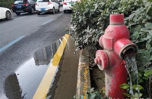 消防栓漏水近半月市民好心疼,记者热线反映后供水部门速修好