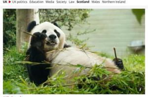 没钱了,英国考虑将大熊猫送回中国