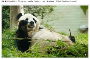 因疫情造成财政压力,英国考虑将大熊猫送回中国