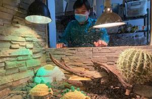"""可爱!北京动物园小陆龟穿毛衣,网友:像极了""""超级玛丽"""""""
