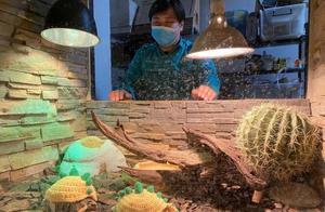 北京的天儿有多冷?动物园的小陆龟都穿毛衣了,兽舍还装了浴霸