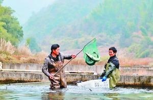 山泉水养出生态鱼