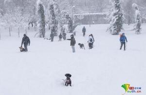 西班牙马德里遭遇50年来最强暴雪 积雪厚度超50厘米