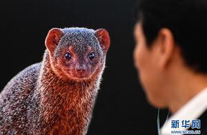 野生动物主题摄影展亮相长春