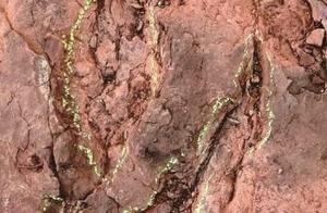 福建首现恐龙足迹 距今8000万年