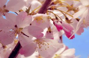 用30张惊艳美图 记录长沙春天的颜色