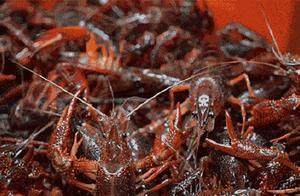建议加强生态防控防止小龙虾泛滥