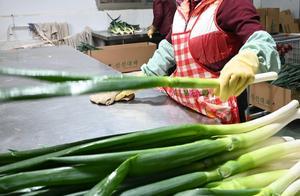 韩国大葱鸡蛋价格暴涨,大葱售价上涨227.5%!究竟啥原因?