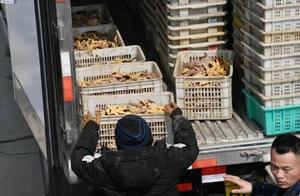 青岛胶州湾已捕杀海星约45万斤