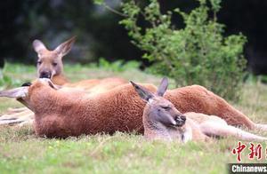 世界睡眠日:动物呆萌睡姿