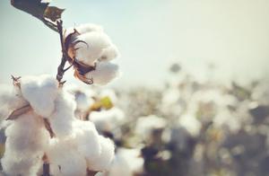 A股力挺新疆棉?纺织板块掀涨停潮,国产服装品牌迎来爆发期