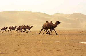 感谢社会各界对新疆野骆驼保护事业的关注支持