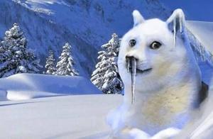 寒潮来临,动物园神奇动物们怎么抗寒?