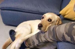 这些笑死人的狗狗的迷惑行为你家狗子有吗?为什么呢?