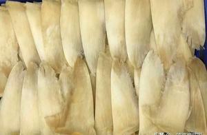 鱼翅的由来历史、种类、营养功效及品鉴