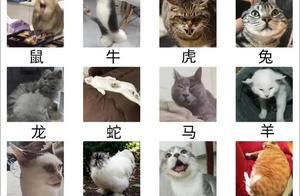 猫为什么进不了十二生肖?