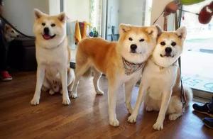 日本的宠物比孩子多?网友:比人过的都好