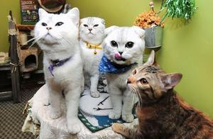 别再说猫咪是白眼狼了!其实这些行为,是它在偷偷关心着你