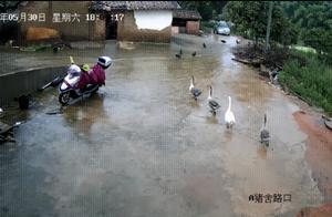 """广东4人""""反伤""""持刀男子,四人先被逮捕,后又被释放?"""