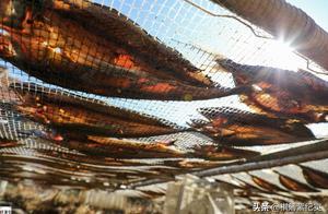 东北小渔村深秋景观:房前屋后晒满鲅鱼,晒鱼人都是百万富翁