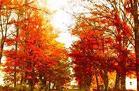 旺苍这些地方的红叶美景逆天颜值,将惊艳整个秋天