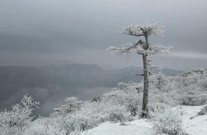 冬天去秦岭看最美的冰花和雾凇,说不定还能看见野生羚牛和野猪。