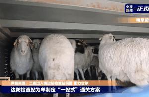 蒙古国捐赠的羊羊羊……肉来了