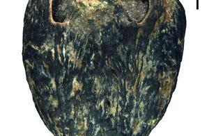 你吃过酸枣吗?中美考古团队发现1500万年前的南酸枣,形态更多样