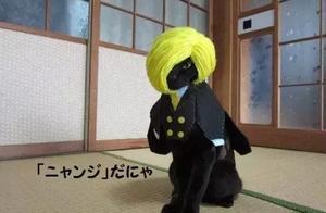 主人给黑猫戴上头套,气质立马就变得狂拽酷炫吊炸天