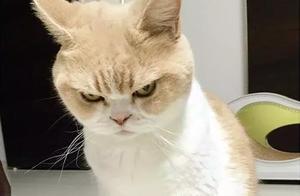 """""""外甥总欺负猫,我打他有错吗?"""""""