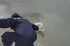 流浪狗不慎落入冰湖,保安救出后不愿离开,上演感人一幕