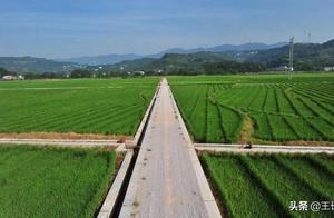 """拼多多为什么要深耕农业的""""最初一公里""""?"""