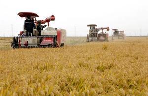 高产新纪录:袁隆平团队今天起将向双季稻亩产 1500 公斤冲刺