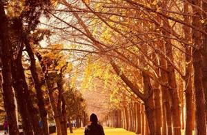 11月,我建议你一定要去一次北京