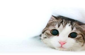 老是打哈欠的猫咪,是不是真的想睡觉?