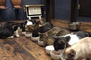 岛国这家猫咖的里的咖啡和甜品都好可爱,猫咪最可爱