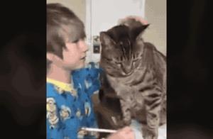 每一个成功者的背后,都有一只甘愿做垫脚石的猫