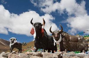 西藏为什么不包邮呢