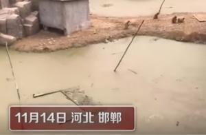 网传邯郸动物园猴子住绿藻污水池 园方回应