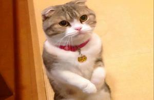 """猫咪要是有这6个表现,说明它""""认错""""了,别再误会它了"""