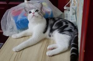 青天白日,正嗨的猫咪为何突然眉头一皱,主人却表示很开心!