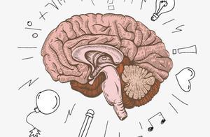 人类大脑被神秘力量限制,只能开发10%?科学家揭秘真实答案
