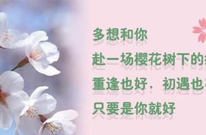 百花齐放,樱花开了两公里!到石家庄龙泉湖公园赏樱花去