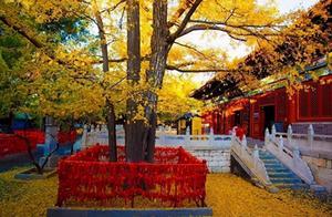 重阳节将至,红叶正当时!北京赏秋指南,请速来查收