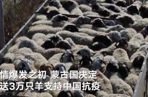 羊真的来啦!航拍蒙古国赠的首批4000只活羊等待通关现场