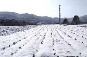 """""""小雪下了雪,来年旱三月"""",小雪下雪有啥说法,老话有道理吗?"""